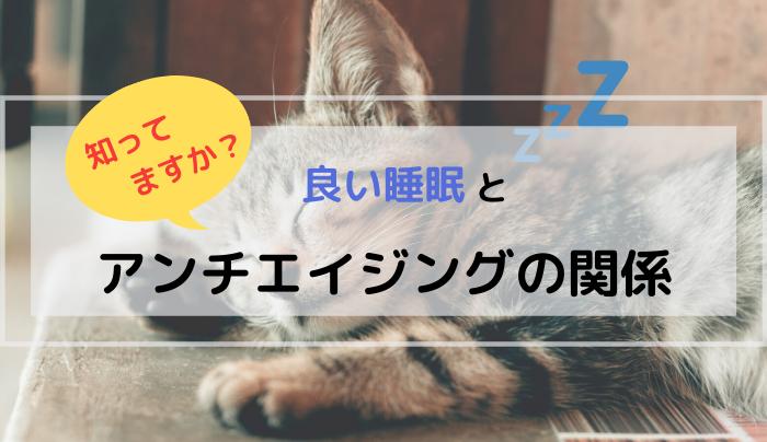 アンチエイジング眠り猫